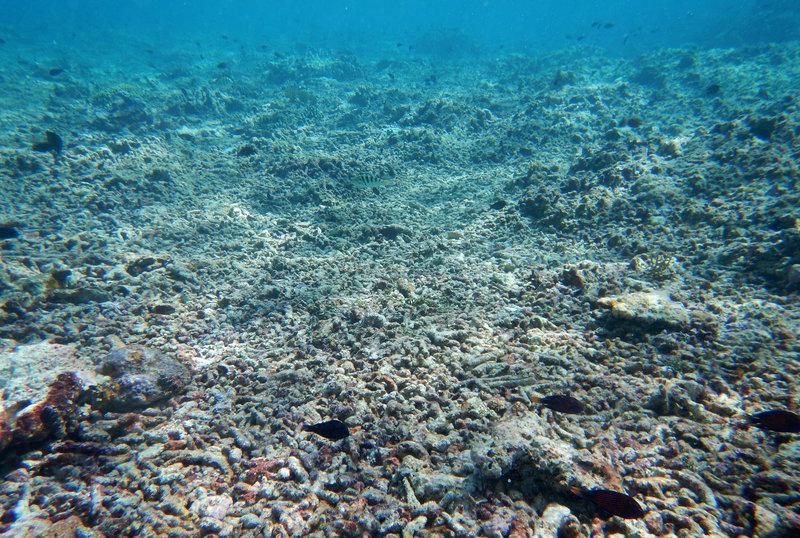 Môi trường biển dưới đáy đại dương tan nát sau khi tàu thuyền Trung Cộng khai thác nguồn thủy hải sản ở biển đông. Photo Courtesy: npr